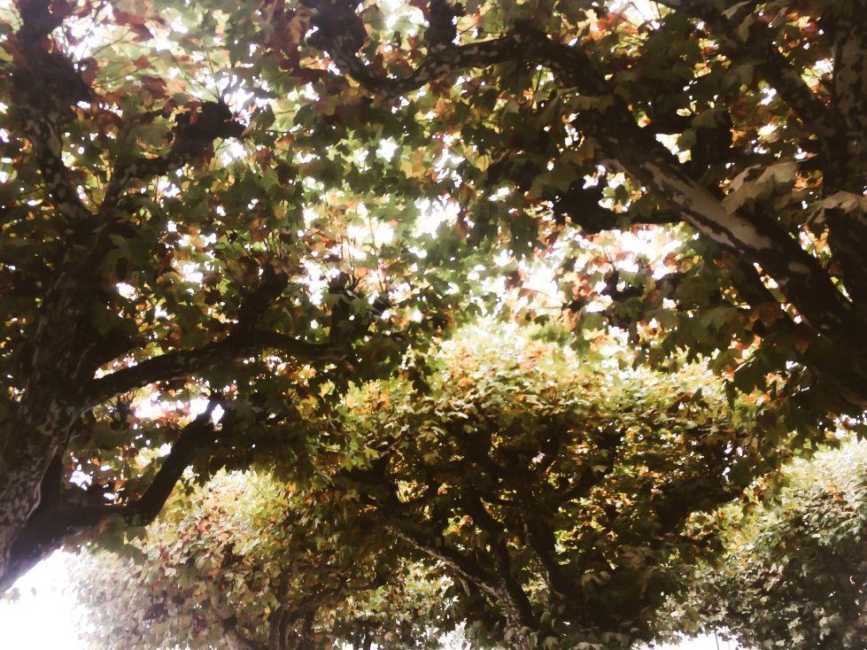 Echo Of Magic- Blog aus Stuttgart: Writing - Ich sehe dich
