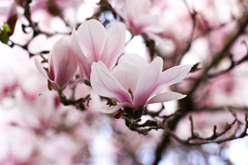 Magnolia – von dem was tiefer geht